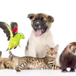 Все для животных